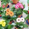 ✿ Домашние и комнатные растения ✿
