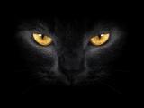 Черный кот ( Юрий Саульский на стихи Михаила Танича)