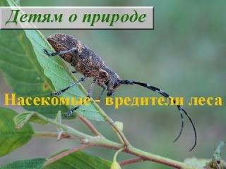 Насекомые - вредители леса. Жуки