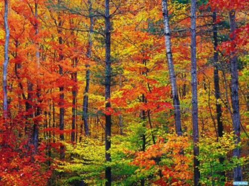 Autumn time ... - Pagina 2 8SuNT9zPq-I
