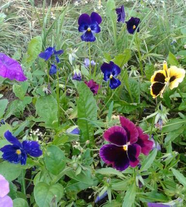 Цветы у Ликки W7h__NoC8ZQ