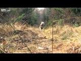 Собака-догоняка, следующий этап развития собаки-камнедобываки.