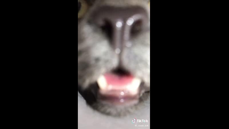 Кот.. | #TikTok (видео приколы)