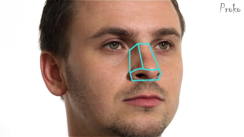 Как рисовать нос — анатомия и структура