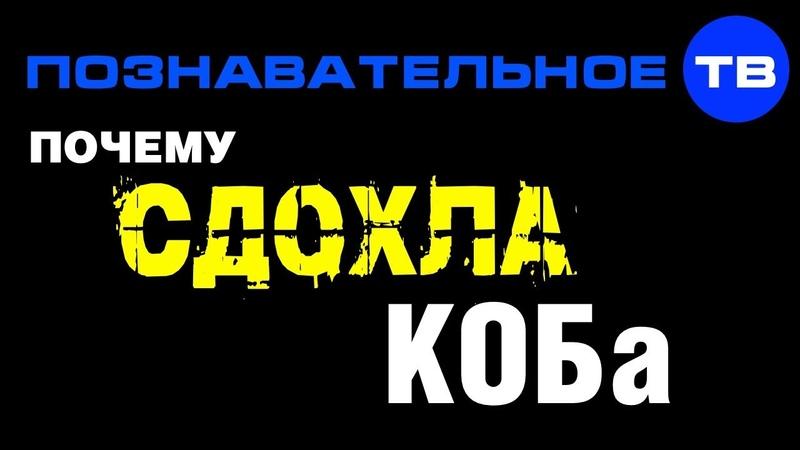 Почему сдохла КОБа (Познавательное ТВ, Артём Войтенков)
