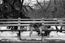 Взгляд собаки может изменить многое… от одного взгляда можно всю жизнь переосмыслить…