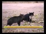 Кот Джедай против кота Ситха  Схватка