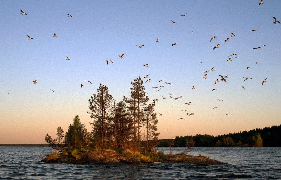 Чайки. Кончезеро. Автор - Виктор Журавлёв