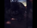 Бешеный пёс моей мамы😅🤯