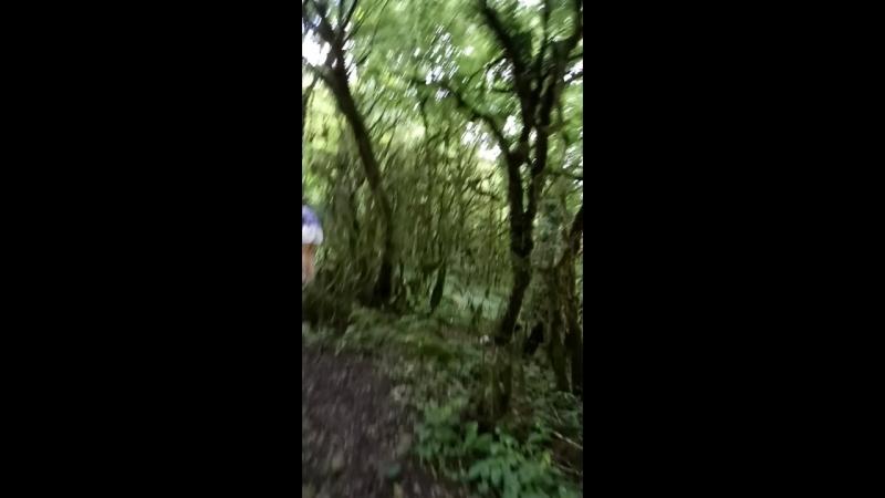 Мы в дремучем лесу