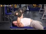 Тренировка упражнения Мышцы груди  Сведение рук с гантелями лежа