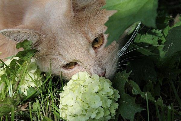 Микрочип для кошек