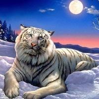 """Схема вышивки  """"Летающие тигры """" - Схемы автора  """"nashatatiana56 """" - Вышивка крестом."""