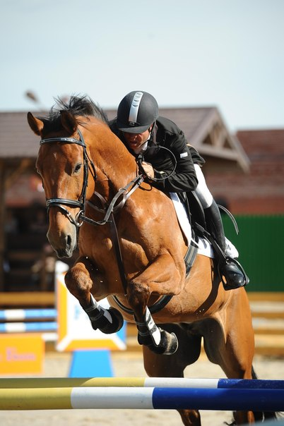 Ссылка horse-park.ru