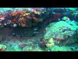 одна соска мировой океан под музыку шри чинмоя группы можно