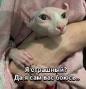 Светлана Демчинкова фотография #2
