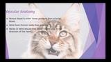 Анатомия и физиология сердца млекопитающих Mammalian Cardiac Anatomy and Physiology