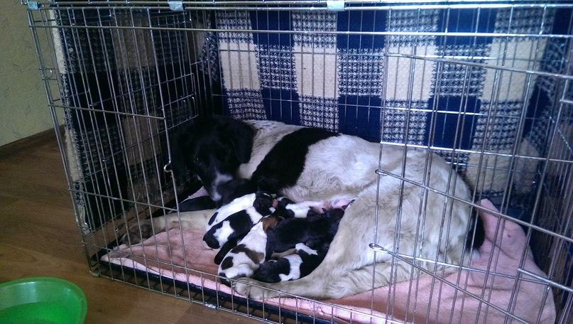 12 щенков с Нововиленской.