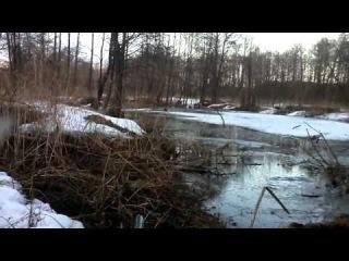 охота на бобра зимой, кто кого пересидит