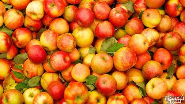 7 причин, по которым нужно есть яблоки 1). Яблоки защищают от болезни Альцгеймера. 2). Яблоки служат отличной профилактикой против рака. 3). Яблоки полезны для профилактики повышенного уровня холестерина. 4). Яблоки полезны для сердца и сосудов. 5). Яблоко защитит от диабета. 6). Яблоки способствуют снижению веса. 7). Яблоки после еды (особенно углеводной) защищают зубы от кариеса. Умный дом - здесь находят ответы!