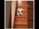 Кошки, на работу!!