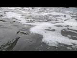 бухта змеиная, море у Казантипе-Щёлкино, феерическая запись