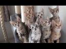 Синхронные котята!