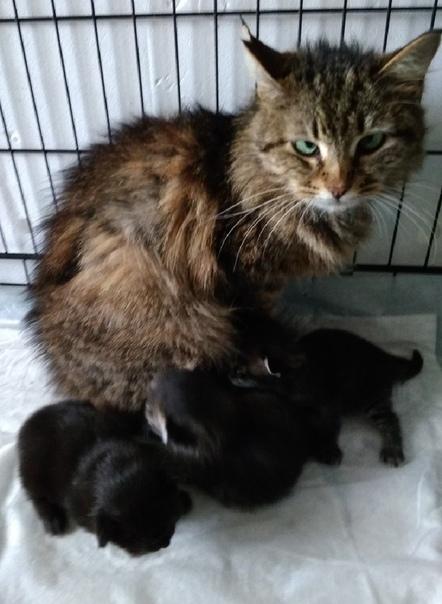 #нужна_финансовая_помощь@vmestepnz_animals #Капа_и_3_котенка