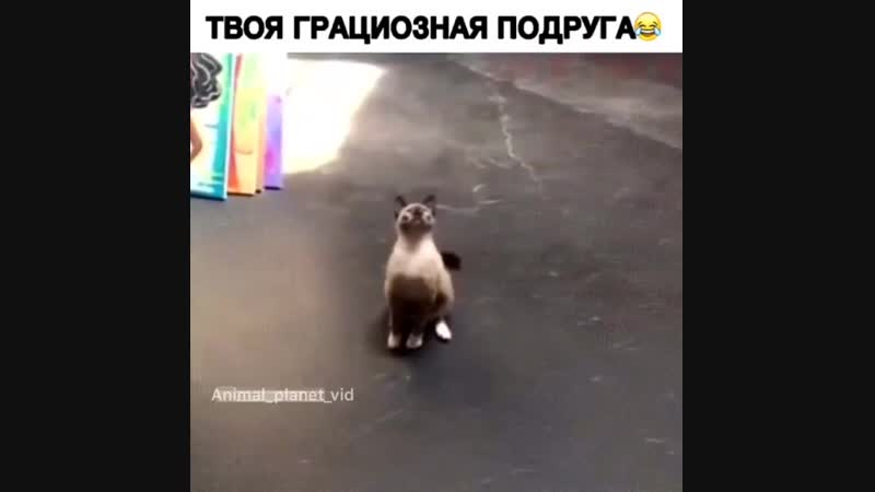 Animal_planet_vidBqrXZeagY2c.mp4