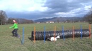 Dog AGILITY EXERCISES with TUNNEL WEAVES- improving SPEED, FOCUS, DISCRIMINATION and weave ENTRIES