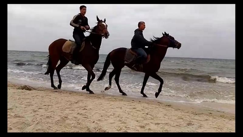 6 утра, лошади на пляже ONE Resort Aqua Park and Spa 4, май 2018
