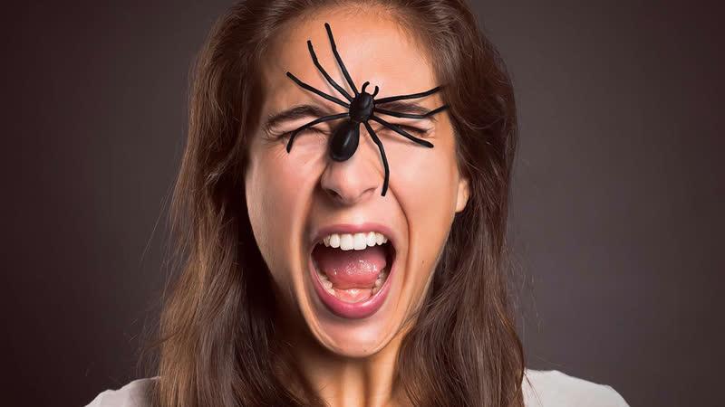 Как бороться с фобиями, например, боязнью рептилий и мышей?