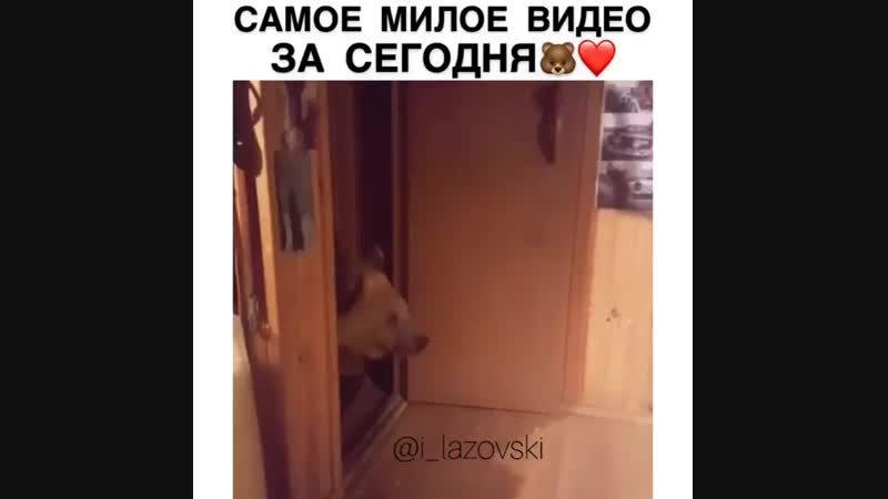 Люди в России так и живут )_grin1_type_3__muscle_type_3_ @svetlan_nko69 ( 750 X 750 ).mp4