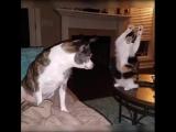 Танцующий кот!