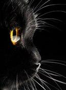"""Оригинал - Схема вышивки  """"черная кошка """" - Схемы вышивки - evgenia777 - Авторы - Портал  """"Вышивка крестом """" ."""