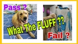 WHAT THE FLUFF CHALLENGE Did you try this with your Pet !! MAGIC TRICK