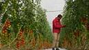 Intégrale comment éviter les pesticides dans nos assiettes - Tout compte fait
