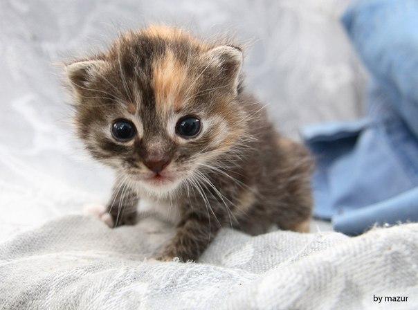 Приключения котенка Китти игра для девочек винкс
