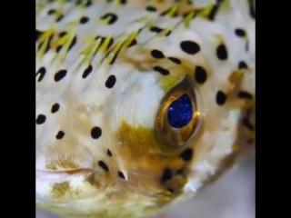 эй рыбка, твои глаза просто космос