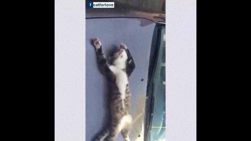 Котик притомился! 😊