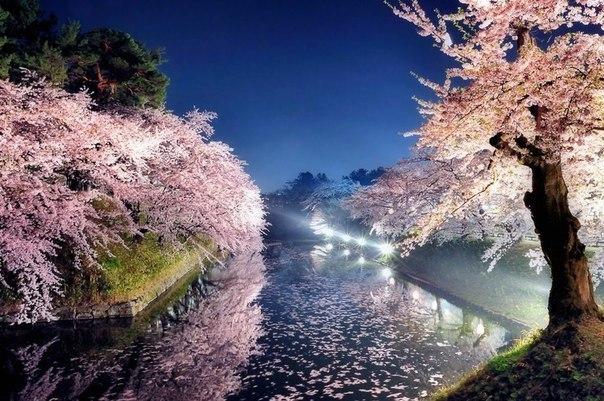 Весенняя ночь в парке, Токио,