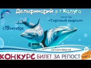 Шоу Черноморских дельфинов в г.Калуга 2018