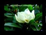Ana Malazonia - Magnolia ( ♥--♫♫-- ეძღვნება ქართველ ემიგრანტებს--♫♫--