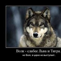 Сергей Волков фото