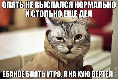 http://cs412227.vk.me/v412227665/2ec2/rYvtYbERwUY.jpg