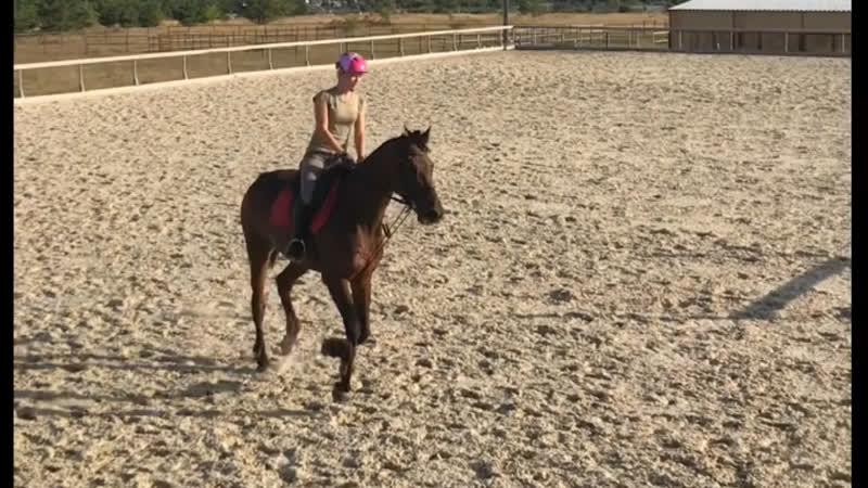 Пол года как я занимаюсь конным спортом
