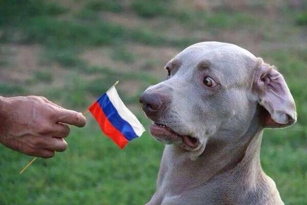 В Горловку прибыла колонна российской бронетехники - около 40 единиц, - Шкиряк - Цензор.НЕТ 4537