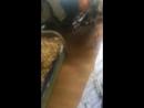 Сало бреет голову под машинку