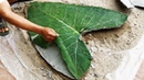 GREEN LUNG. Make most creative flower pots at home - Idea of making pots from the sand and cement