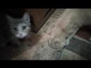 Котики Борьба за выживание
